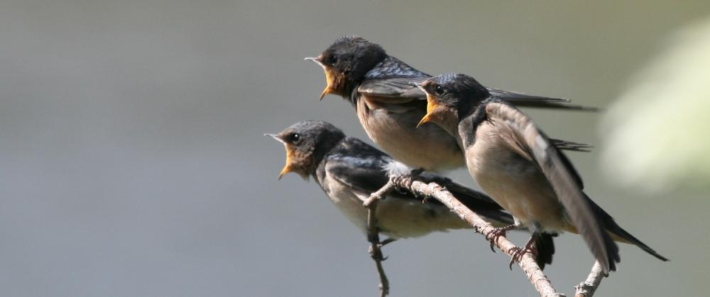 красивых птиц с названиями