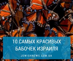 10 самых красивых бабочек Израиля
