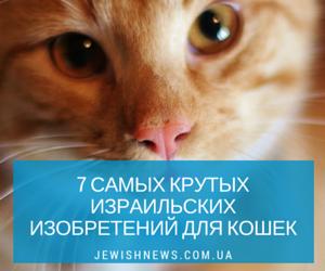 7 самых крутых израильских изобретений для кошек